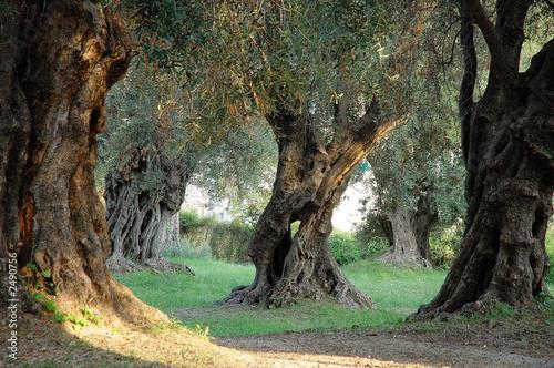 In de dag Olijfboom parc des oliviers