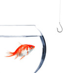 Pi ge hame on dans un bocal poisson photo libre de for Bocal poisson acheter