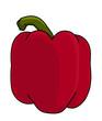 red bell pepper illustration