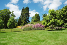 "Постер, картина, фотообои ""trees and lawn on a bright summer day"""
