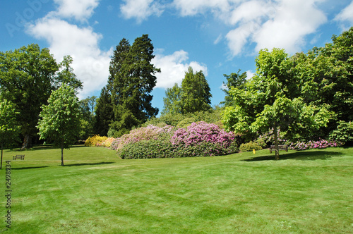 trees and lawn on a bright summer day - 2498934