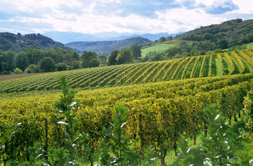french winery in the pyrenese