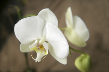 white orchid on natural background