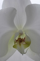 bloom flower orchid white pretty