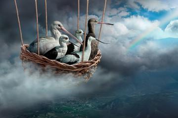 uccelli in viaggio