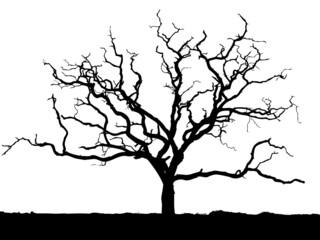arbre détouré