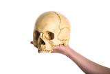 skull on the hand poster