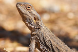 central bearded dragon poster