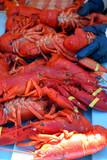 maine lobster fest at rockland poster