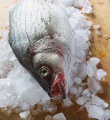 striped bass on ice