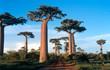 allée des baobabs à morondava, madagascar