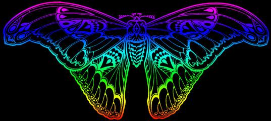 papillon black