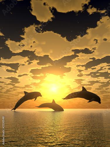 Dolphin dolphin yellow sunset