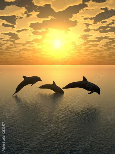 Foto op Canvas Dolfijn dolphin yellow sunset_2