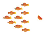 Fototapety fish swarm