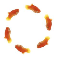 fishcircle