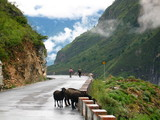 tiger leaping gorge poster
