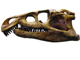 the skull of the giant reptile poster