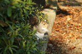 Little squirrel between bushes and fallen leaves poster