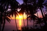 sundown and palms poster