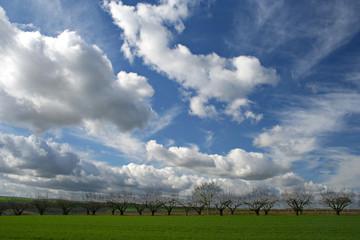 ciel nuageux et cerisiers