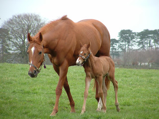 horse and foal walking