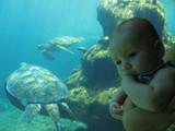 bébé et tortues marines dans aquarium poster