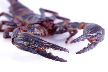pince de scorpion
