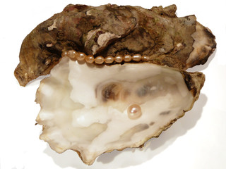 oyster shell2