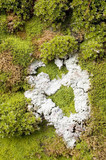 moss and lichen abstract poster