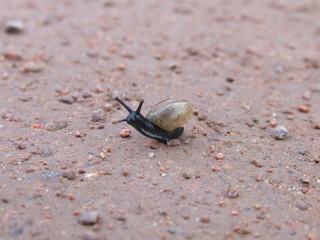 black snail- schwarze schnecke