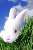 cute easter bunny peeking through the grass - Fine Art prints