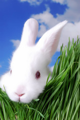 cute easter bunny peeking through the grass