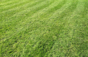 freshly cut grass with lines.