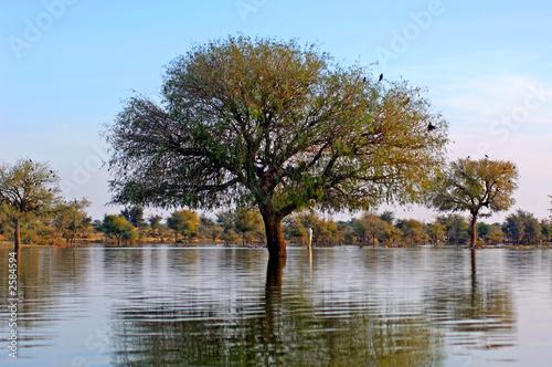 india, rajasthan, jaisalmer: the lake near jaisalmer