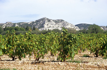 viticulture in southern france