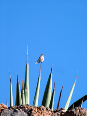 bird on cactus