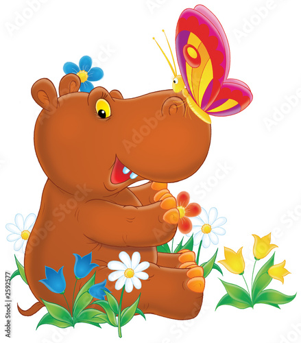 Poster Zoo hippopotamus and butterfly