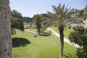 palms in rodos