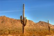 desert saguaro 34