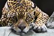 roleta: jaguar