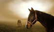 Leinwandbild Motiv horse in the mist