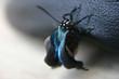 un folding wings