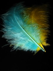 ''feather 4''