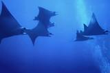 Fototapeta podwodne - nurkować - Ryba
