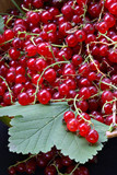crop of red currant on leaves poster