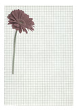xxl size squared paper page with flower motive poster