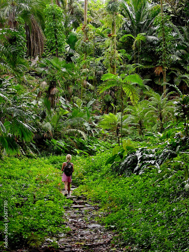 girl in the rainforest