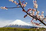 Fototapety plum blossoms x