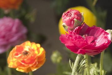 flower rhapsody 1